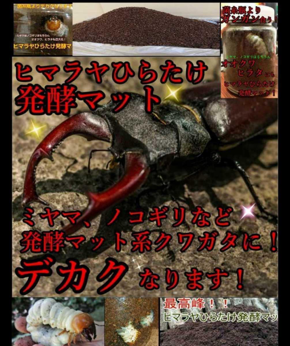 ヒマラヤひらたけ発酵マット☆カブトムシ・クワガタの幼虫の餌、産卵マットに!栄養価抜群なのでビッグサイズ狙えます!クヌギ100%原料_画像9