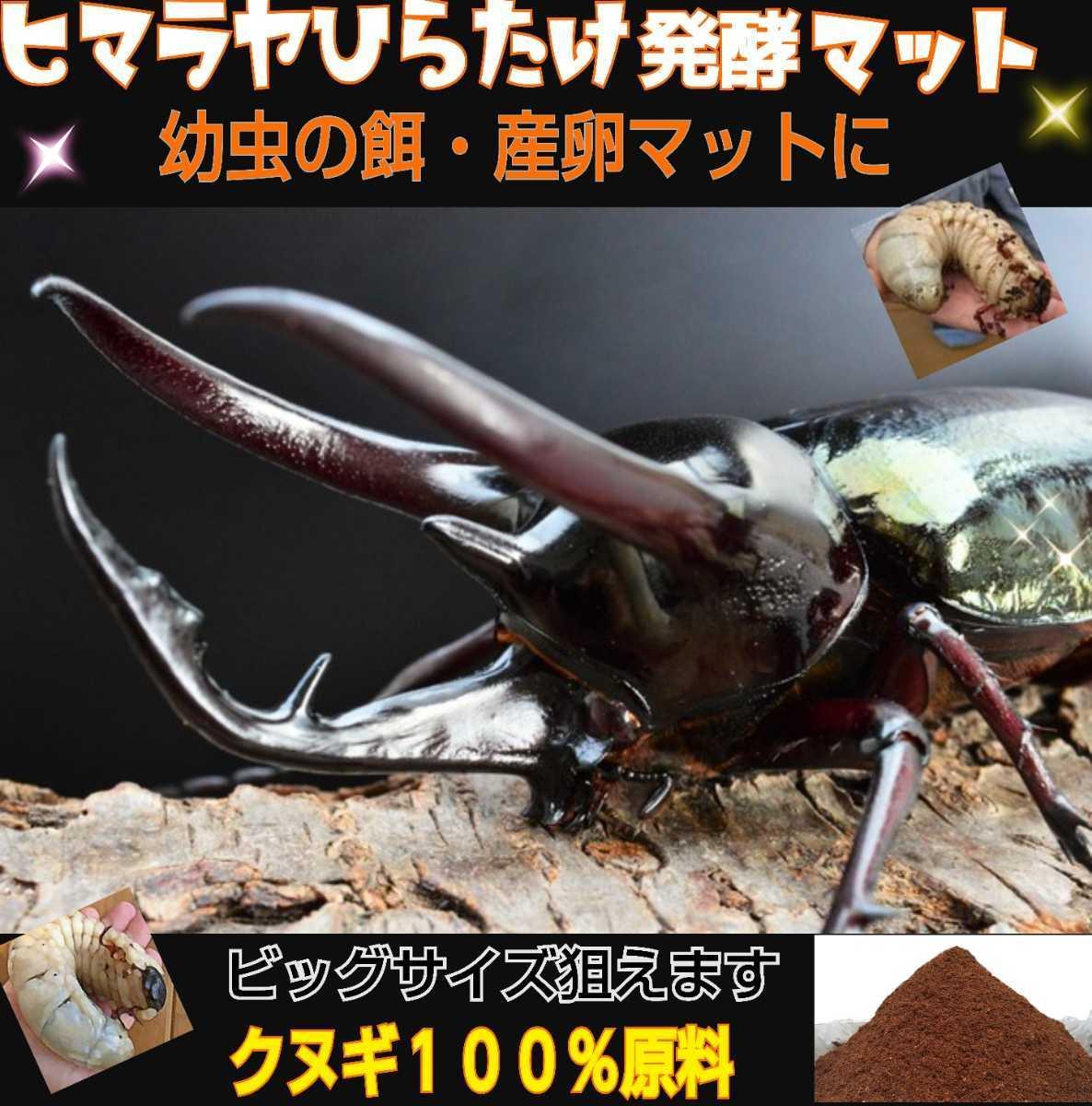 ヒマラヤひらたけ発酵マット☆カブトムシ・クワガタの幼虫の餌、産卵マットに!栄養価抜群なのでビッグサイズ狙えます!クヌギ100%原料_画像3