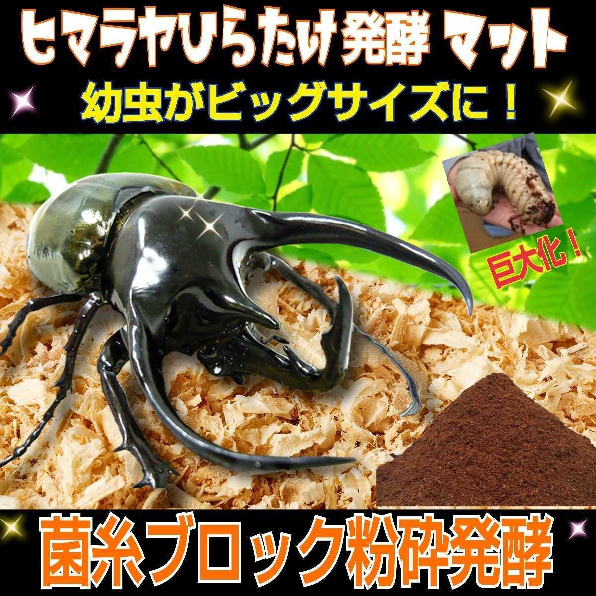 ヒマラヤひらたけ発酵マット☆カブトムシ・クワガタの幼虫の餌、産卵マットに!栄養価抜群なのでビッグサイズ狙えます!クヌギ100%原料_画像5