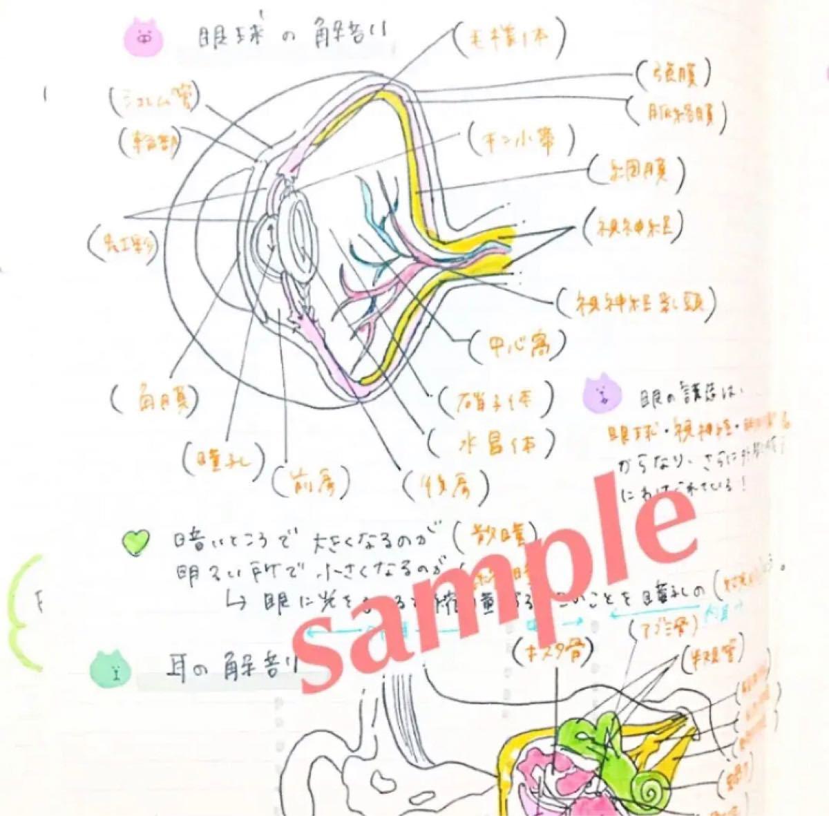 看護師国家試験 付箋&解剖生理ノート