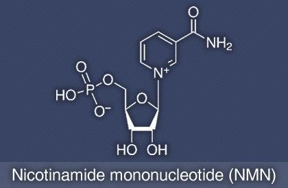 大容量 1000g!! NMNパウダー ニコチンアミドモノヌクレオチド Nicotinamide mononucleotide_画像3