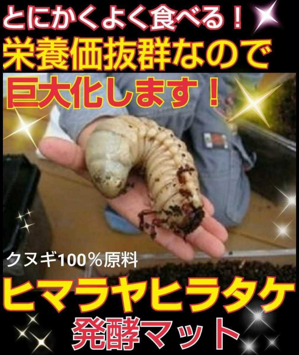 ヒマラヤひらたけ発酵マット☆カブトムシ・クワガタの幼虫の餌、産卵マットに!栄養価抜群なのでビッグサイズ狙えます!クヌギ100%原料_画像1