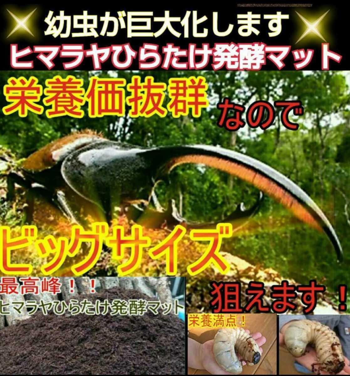 ヘラクレスもビッグサイズになります!ヒマラヤひらたけ菌床発酵カブトムシマット!栄養価抜群!クヌギ100%原料 幼虫の餌、産卵マットに!_画像4