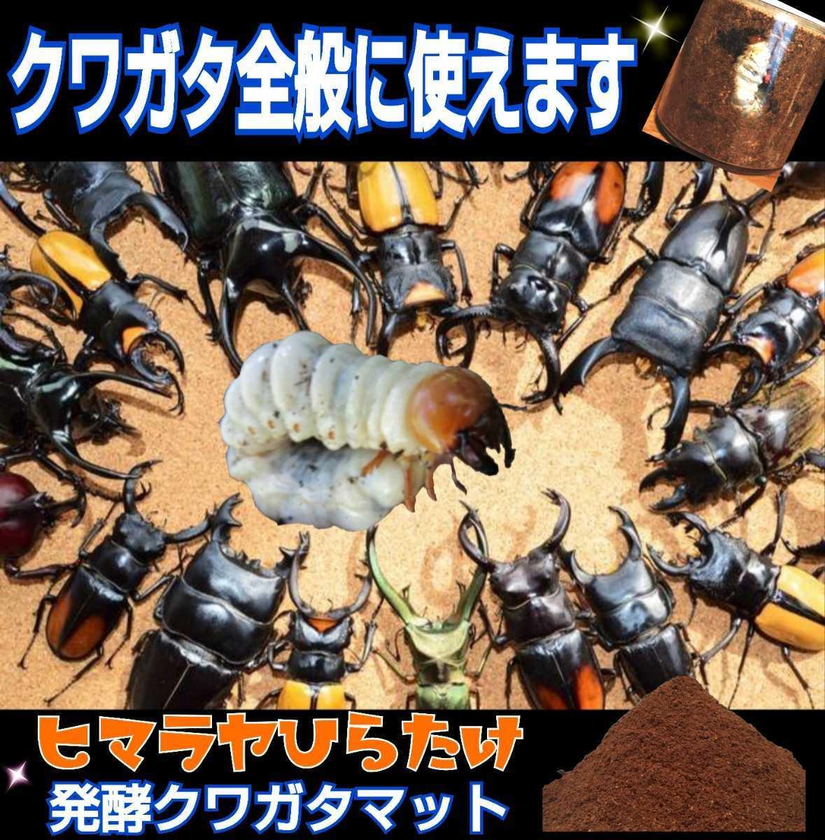 500リットル 幼虫がビッグサイズになります!ヒマラヤひらたけ菌床発酵マット!栄養価抜群!クヌギ100%原料 幼虫の餌、産卵マットにも抜群_画像8