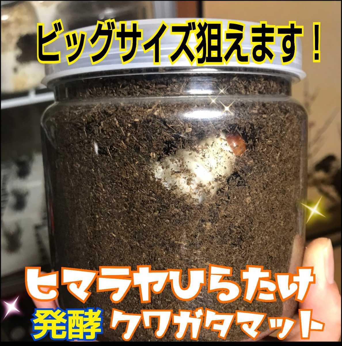 ヘラクレスもビッグサイズになります!ヒマラヤひらたけ菌床発酵カブトムシマット!栄養価抜群!クヌギ100%原料 幼虫の餌、産卵マットに!_画像9