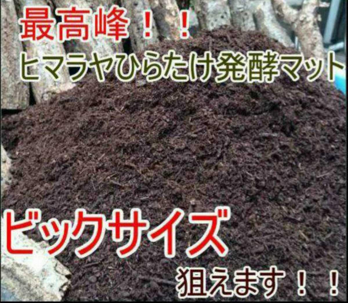 500リットル 幼虫がビッグサイズになります!ヒマラヤひらたけ菌床発酵マット!栄養価抜群!クヌギ100%原料 幼虫の餌、産卵マットにも抜群_画像2
