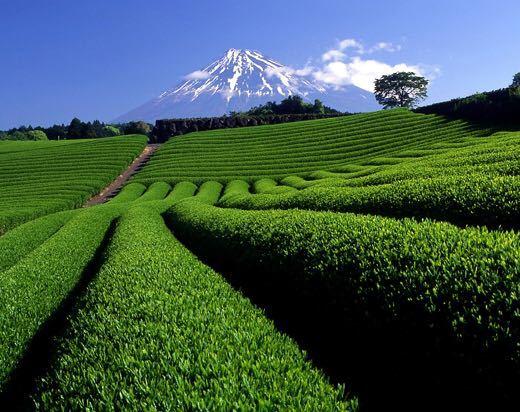 【産地直売】お得な2袋セット!一番茶のみ!粉末入り玄米茶 合計400g_画像3