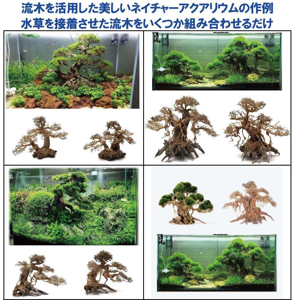 【美品・数量限定】三段熱帯雨林のバニヤン流木_画像9