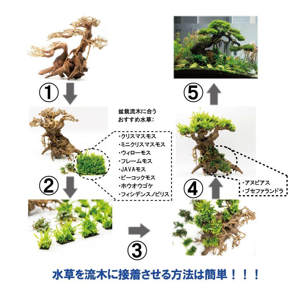 【美品・数量限定】三段熱帯雨林のバニヤン流木_画像8