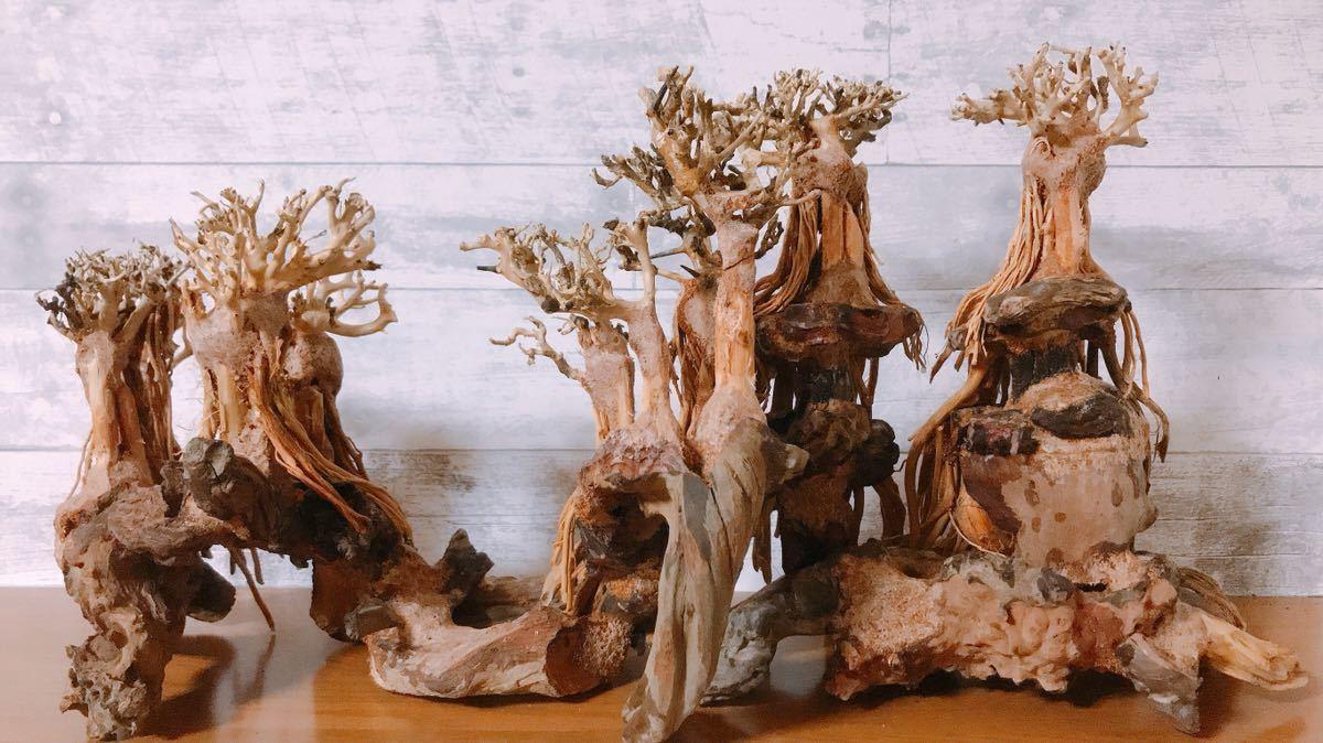 【美品・数量限定】三段熱帯雨林のバニヤン流木_画像5