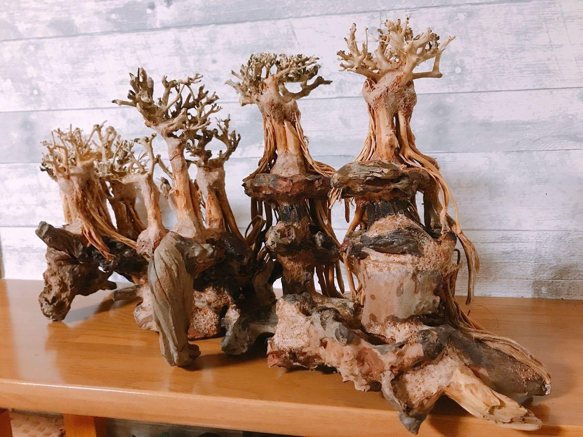 【美品・数量限定】三段熱帯雨林のバニヤン流木_画像7