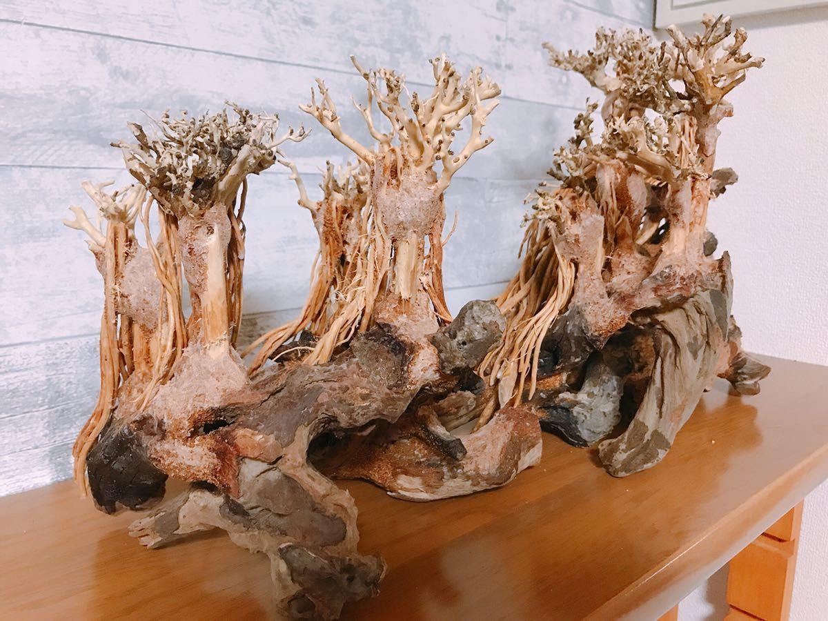 【美品・数量限定】三段熱帯雨林のバニヤン流木_画像6