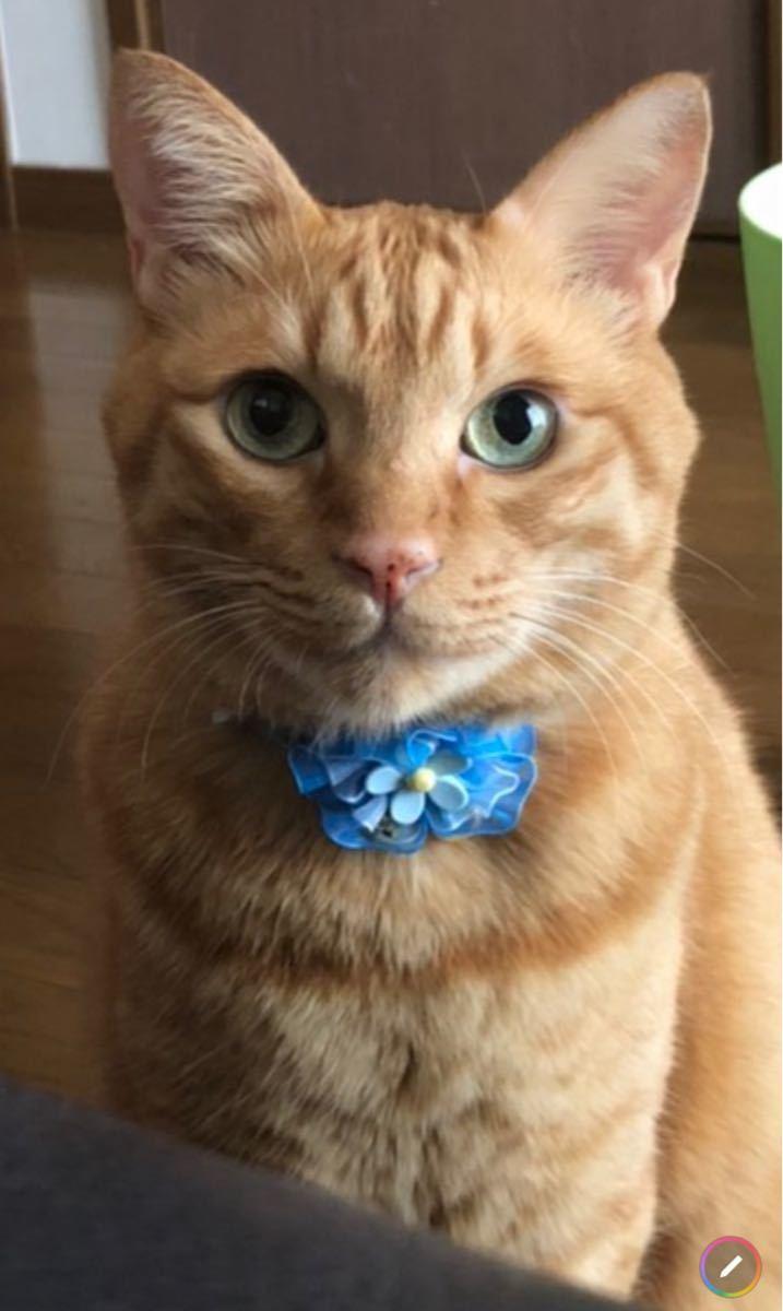 ペット用品、猫シュシュ、犬首輪、鈴付き、ブルー