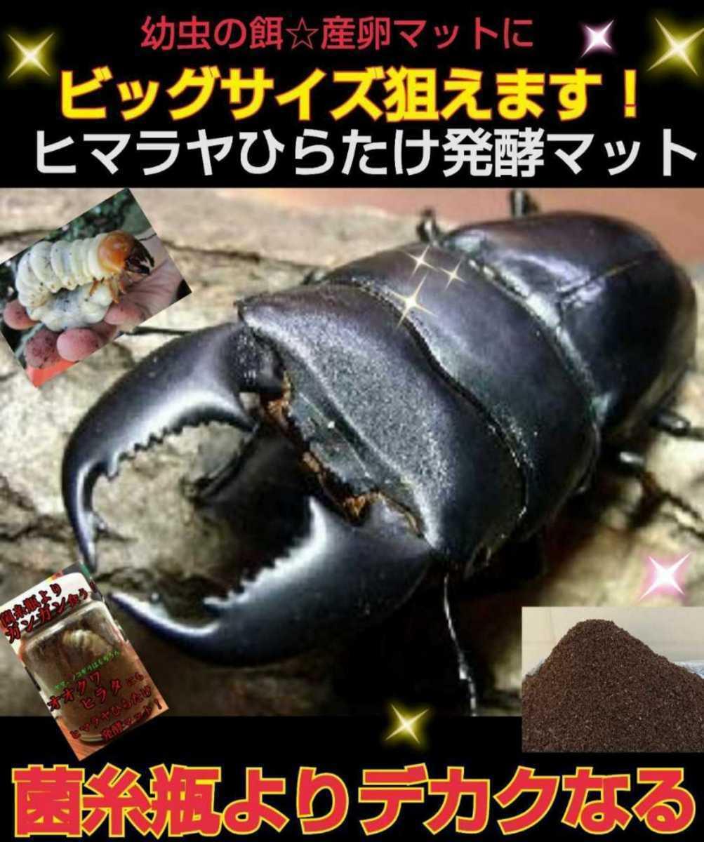 ミヤマクワガタやノコギリクワガタがビックサイズに!ヒマラヤひらたけ発酵マット!栄養価抜群!クヌギ100%原料 幼虫の餌、産卵マットに!_画像7