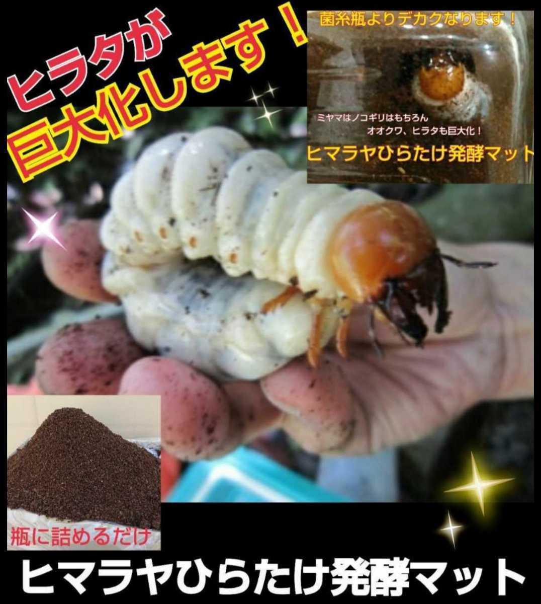 ミヤマクワガタやノコギリクワガタがビックサイズに!ヒマラヤひらたけ発酵マット!栄養価抜群!クヌギ100%原料 幼虫の餌、産卵マットに_画像8