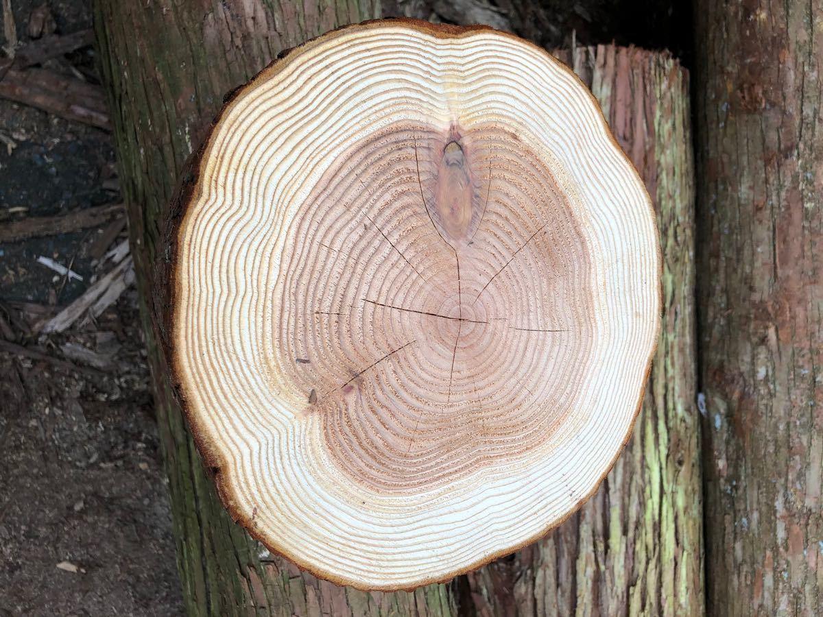 薪割り台 H 20cm