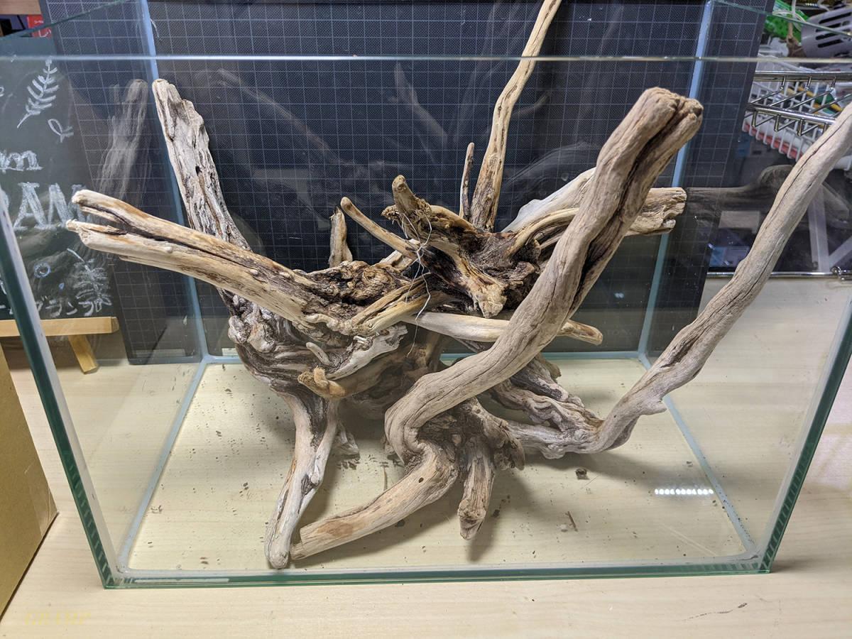 〓GRAMP〓 流木セット 45cm水槽いっぱいの量 No.2_画像3