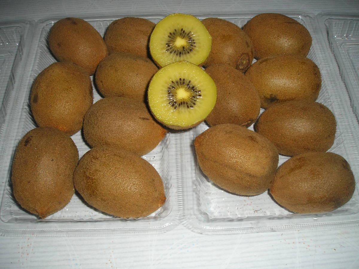 超特価キウイフルーツ新鮮とれたてMサイズ1セツト(2パツク)_画像1