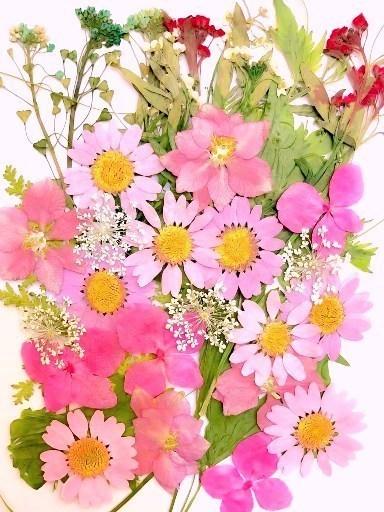 押し花素材 ピンクデザインパック 大容量 35枚ドライフラワー デコ レジン 封印_画像1