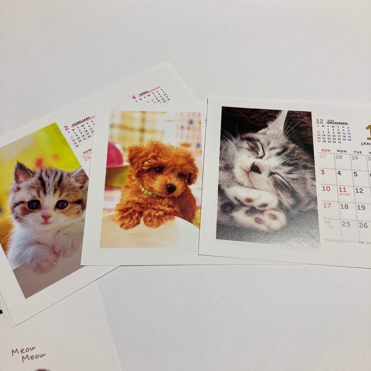 【DOG &CAT】新品未使用 2021年 卓上カレンダー 壁掛け 犬 猫_画像2