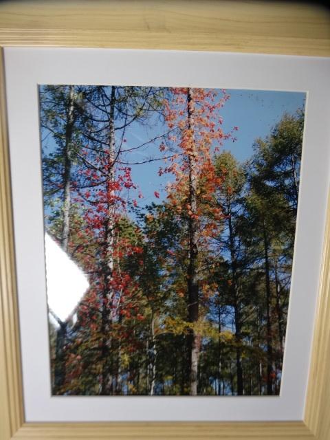 秋の風景 2 立ち木 _画像1