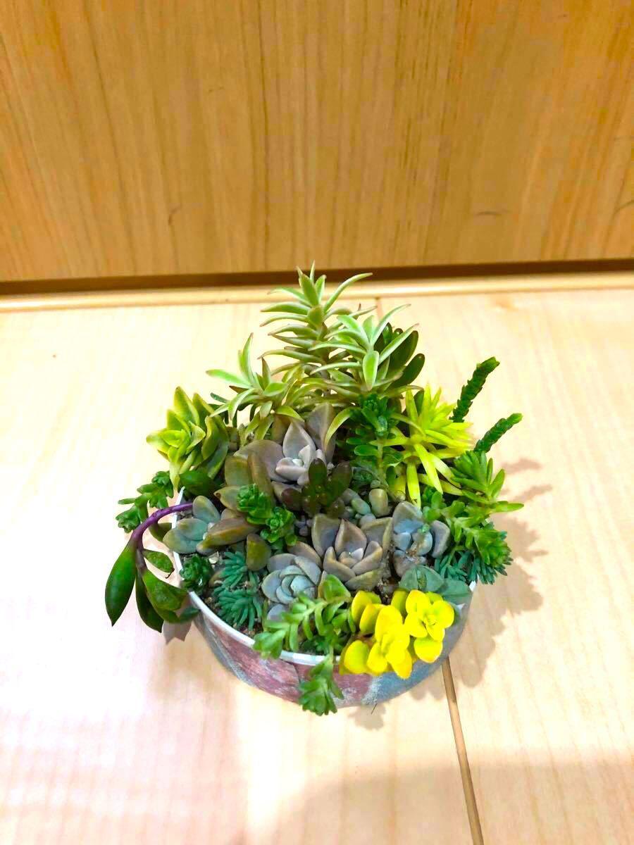 寄せ植え 20種類30個入り。ぬき苗、根付き。土、鉢無しです。