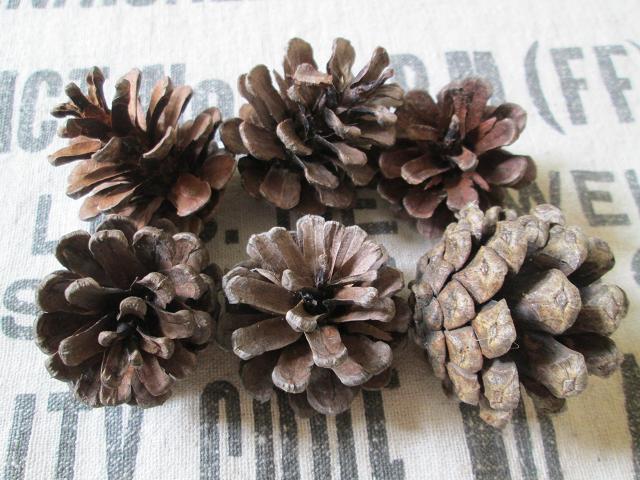 C*C 木の実セット3種 リース素材 松ぼっくり 胡桃 どんぐり帽子 ボタニカルアート ハーバリウム 植物標本③_画像2