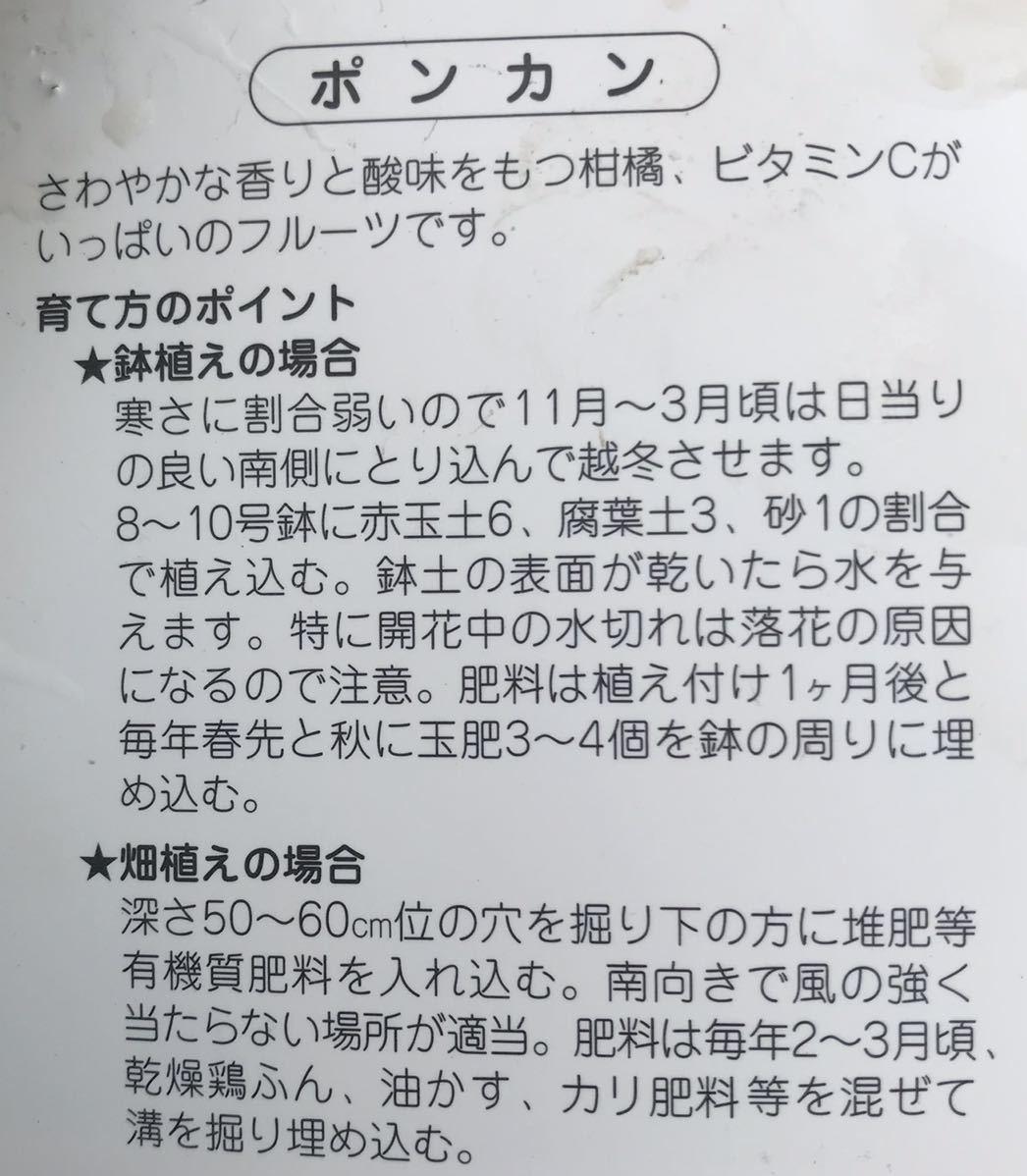 ポンカン苗木_画像2