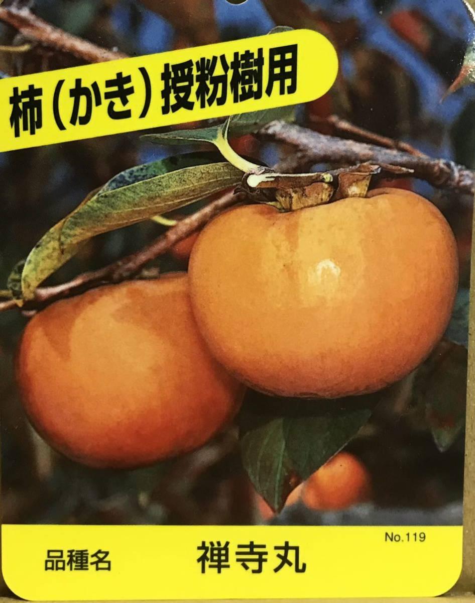 柿 禅寺丸 カキ接木苗木_画像1