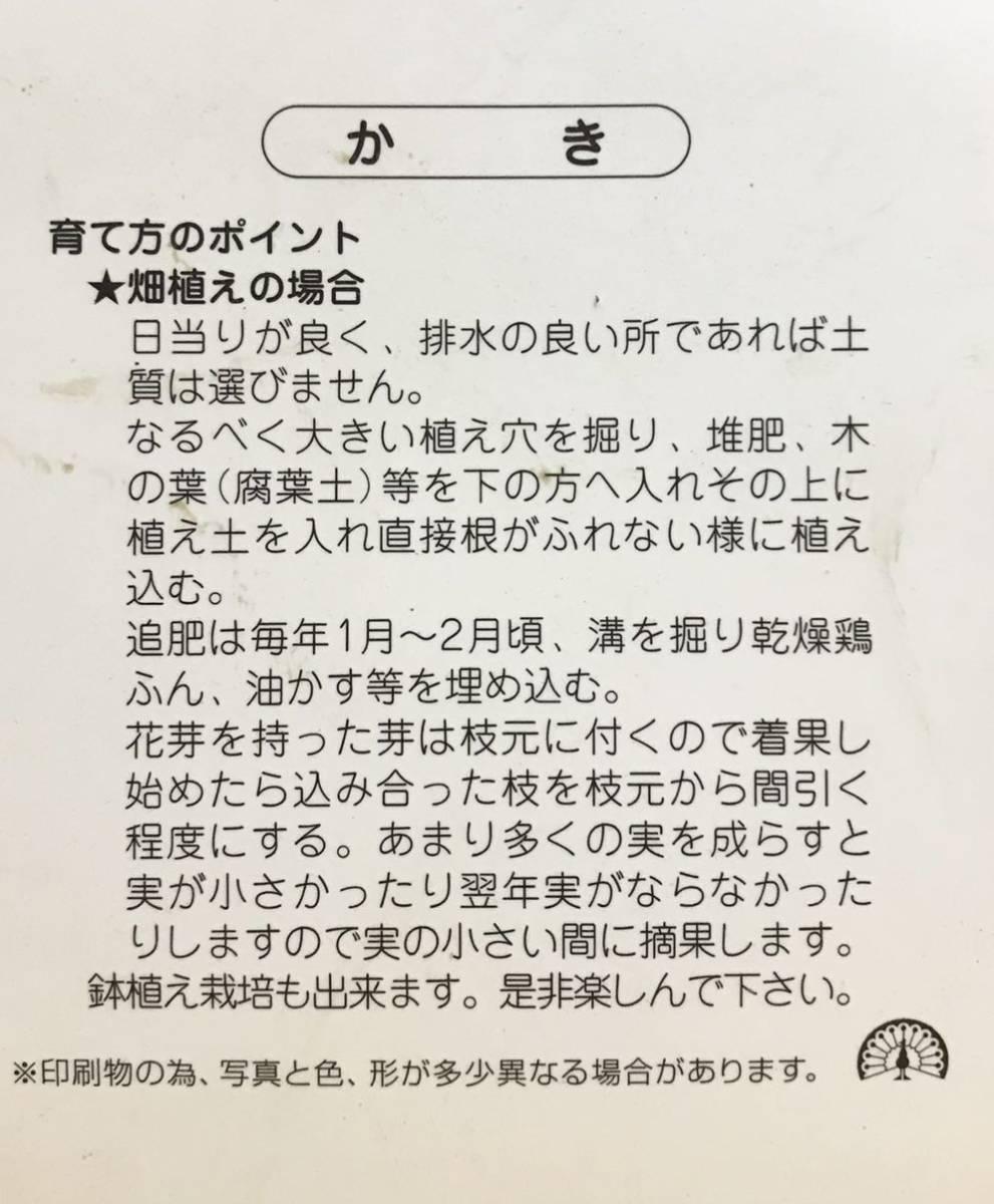 柿 禅寺丸 カキ接木苗木_画像2