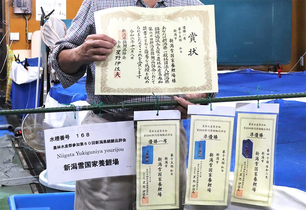 新潟雪国家養鯉場【商品No1915】   紅白 各35cm~45cm 生産者直送_画像3