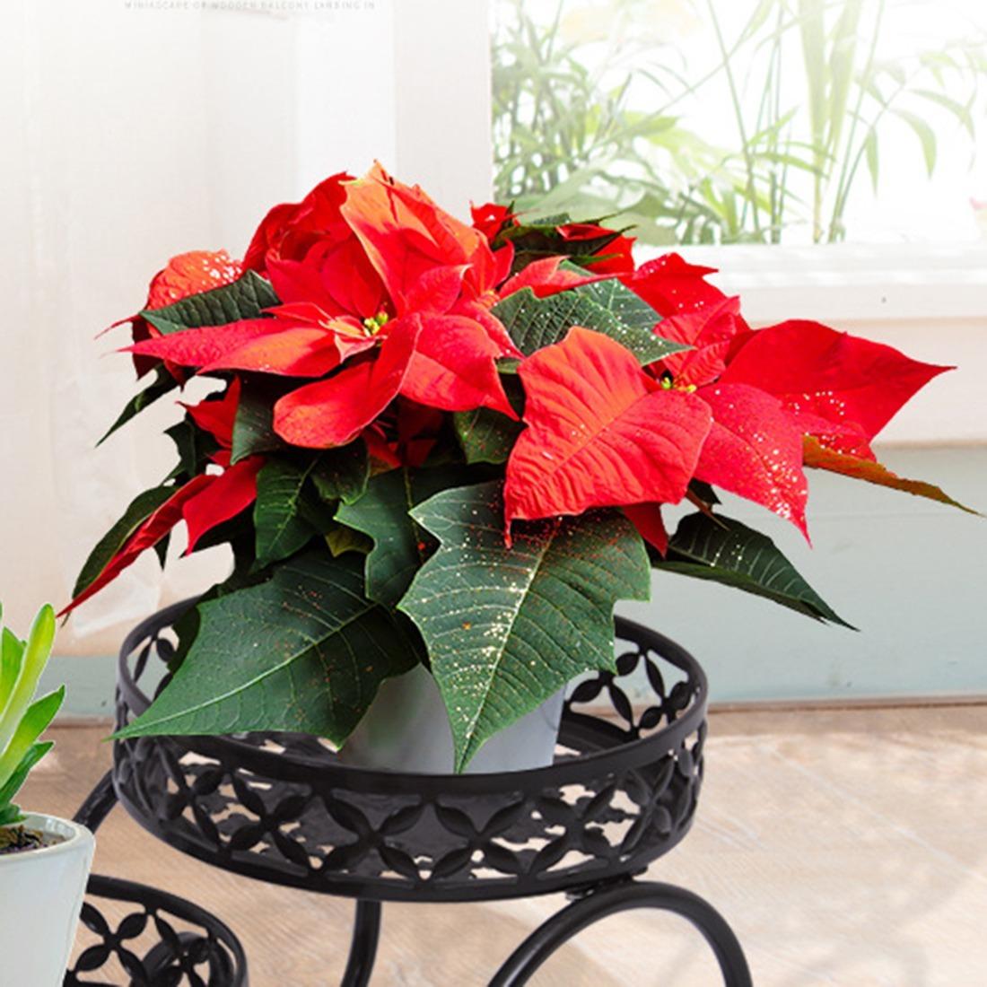 ◆最安にします◆ 掘り出し物 フラワーポットスタンド 植木鉢 観葉植物 多肉植物 庭のDIY AT10283_画像3