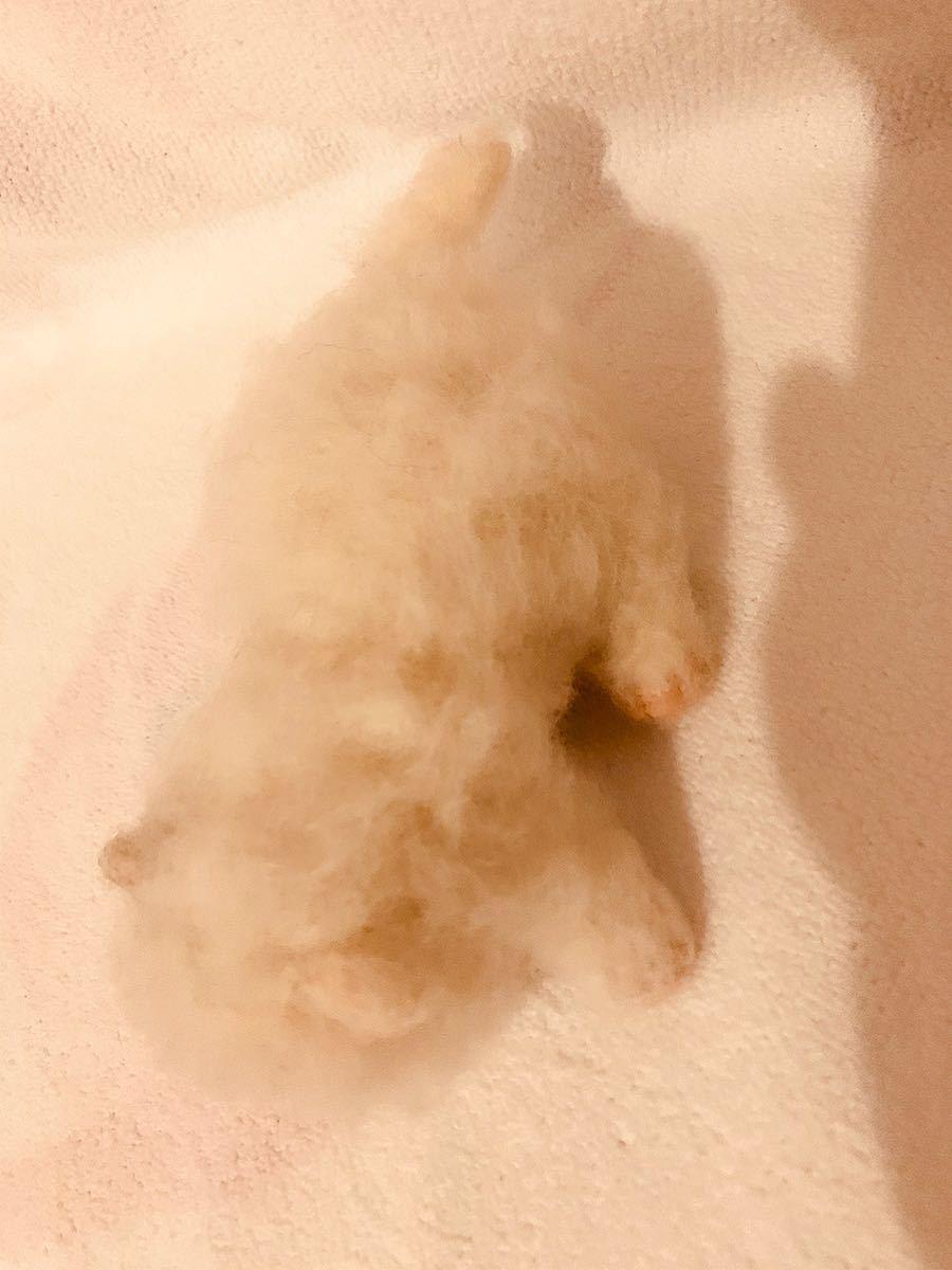 羊毛フェルト ねこ 猫 ハンドメイド_画像4