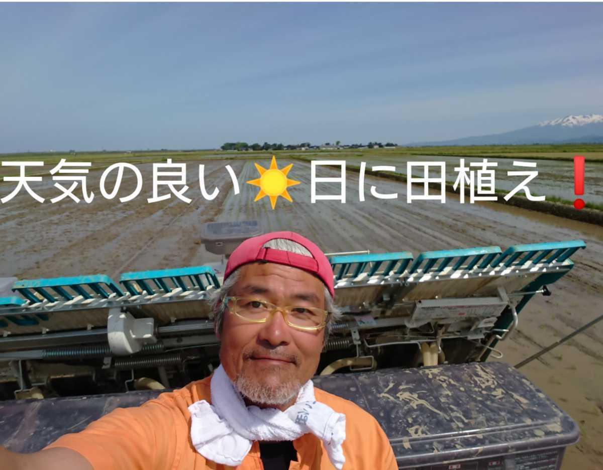 自然栽培 お米の旨みたっぷり 氷温熟成米 つや姫 令和2年産 山形県産 庄内米 玄米 10kg(5kg×2袋) 送料無料_画像6