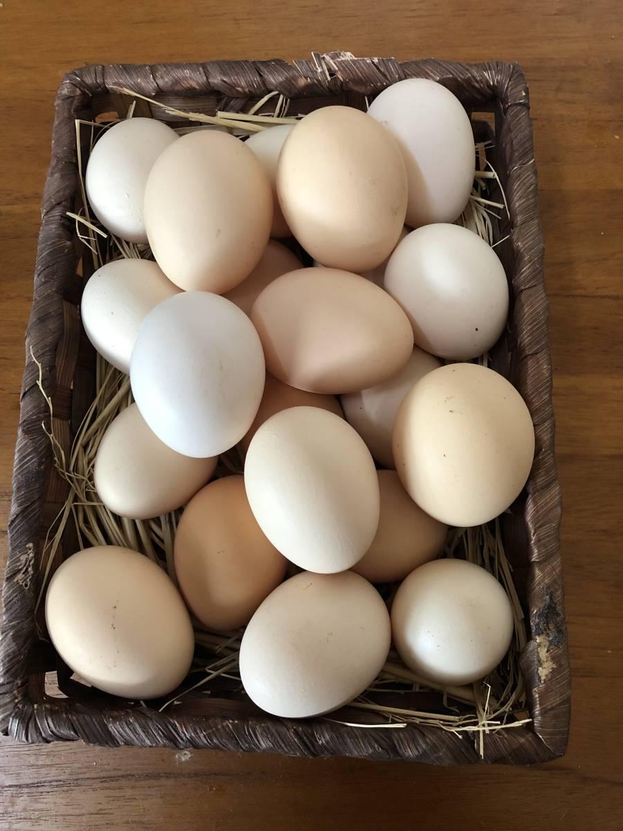 放し飼い鶏有精卵20個+割れ保障2個_画像4