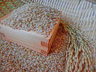 ★減農薬栽培◆玄米発送◆滋賀県産近江米令和2年産キヌヒカリ玄米10㌔発送直前精米 農家直販 美味しいお米 安心安全 遠赤外線乾燥②_画像3
