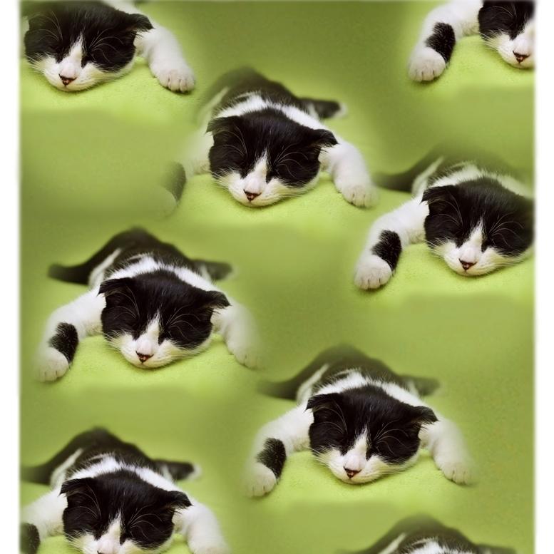 - にゃおんの恐怖 ch290 アートポスター A4プリント ねこ ネコ ねこあそび ごろにゃん 猫まね ニャンコ にゃんこ funny cat Art poster_画像1