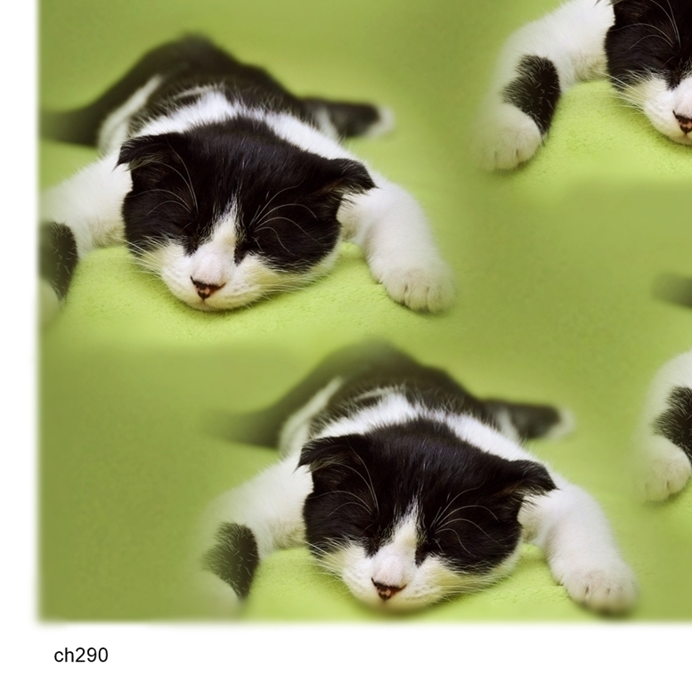 - にゃおんの恐怖 ch290 アートポスター A4プリント ねこ ネコ ねこあそび ごろにゃん 猫まね ニャンコ にゃんこ funny cat Art poster_画像3