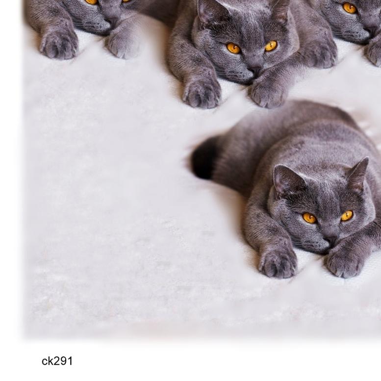 - にゃおんの恐怖 ck291 アートポスター A4プリント ねこ ネコ ねこあそび ごろにゃん 猫まね ニャンコ にゃんこ funny cat Art poster_画像3