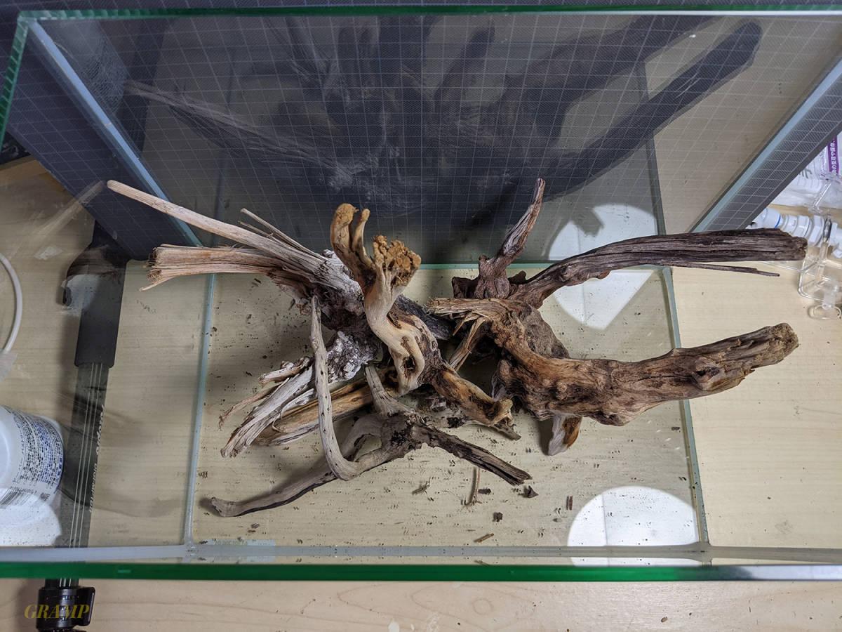 〓GRAMP〓 流木セット 45cm水槽いっぱいの量②_画像7