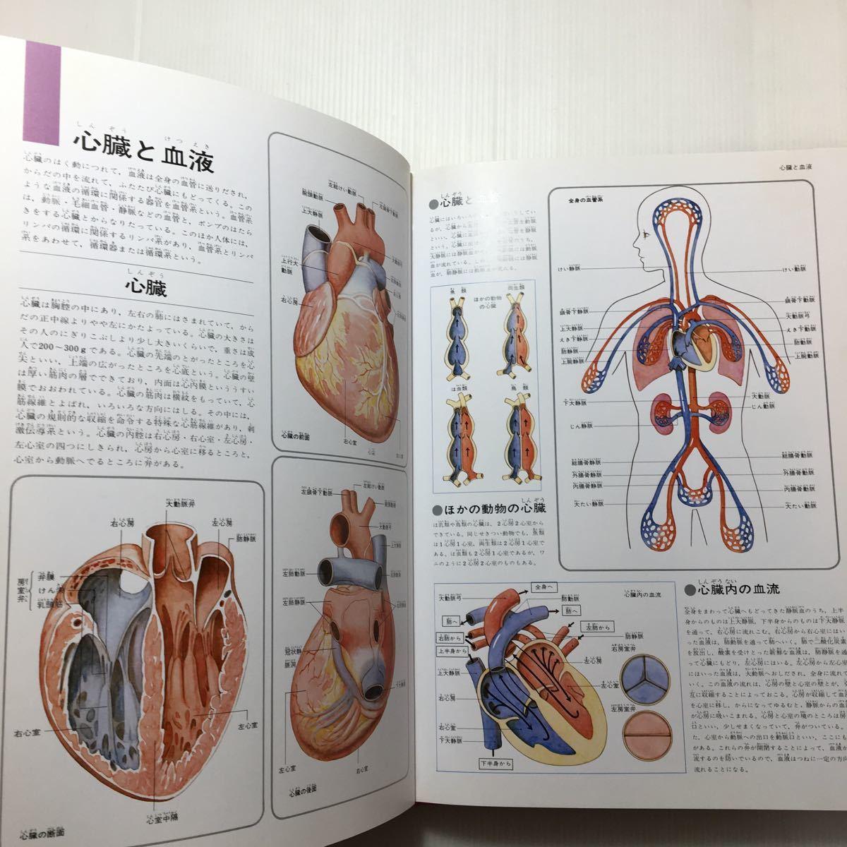 zaa-m1b♪原色ワイド図鑑―Picture encyclopedia (人体・保健) 大型本 1996/9/1 伊藤年一 (著) 学研