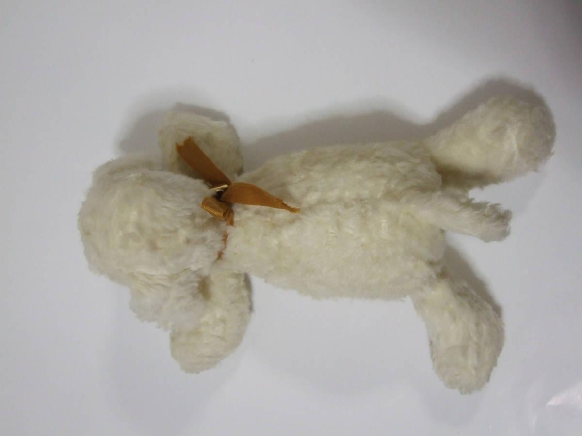 seat gchi dog angel... want . dog SEKIGUCHI