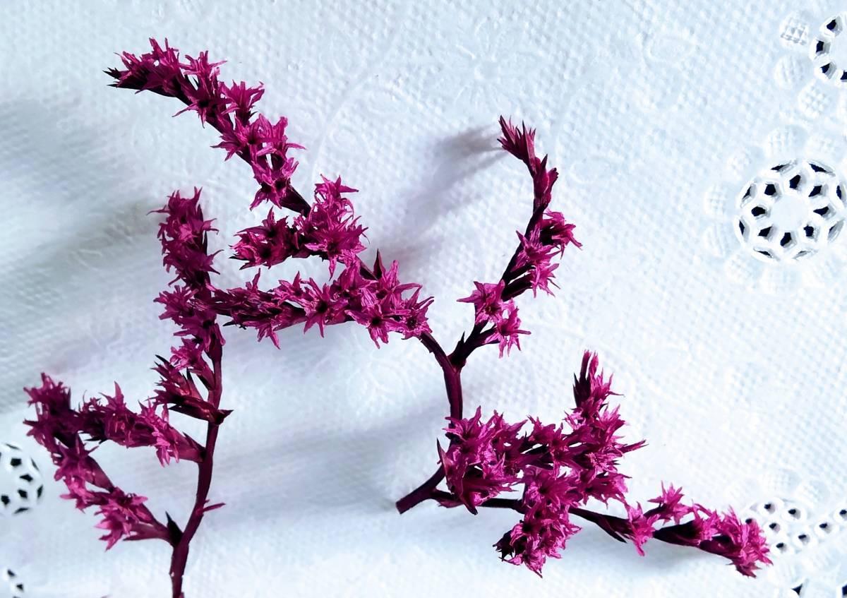 ●ドライフラワー タタリカ ピンク ハーバリウム ボタニカルキャンドル アロマワックスサシェ リース 少量 8●_画像4