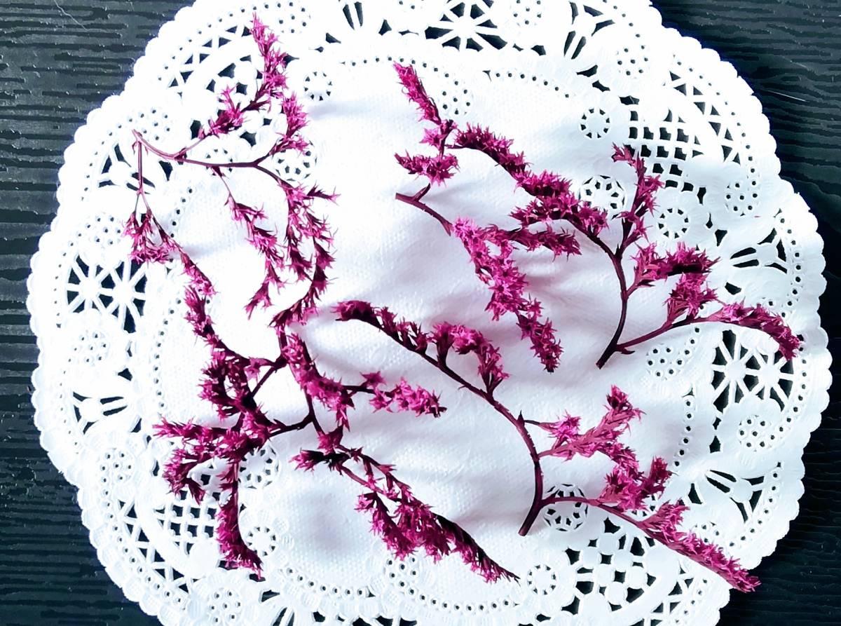 ●ドライフラワー タタリカ ピンク ハーバリウム ボタニカルキャンドル アロマワックスサシェ リース 少量 8●_画像2