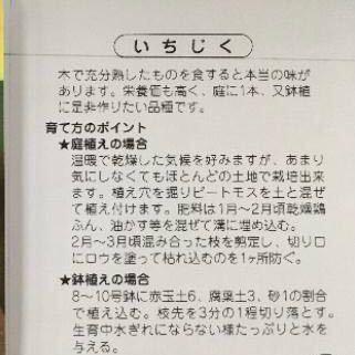 ホワイト無花果 苗木_画像2