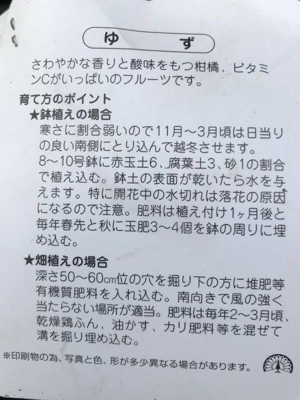 獅子柚子(ししユズ)苗木_画像2