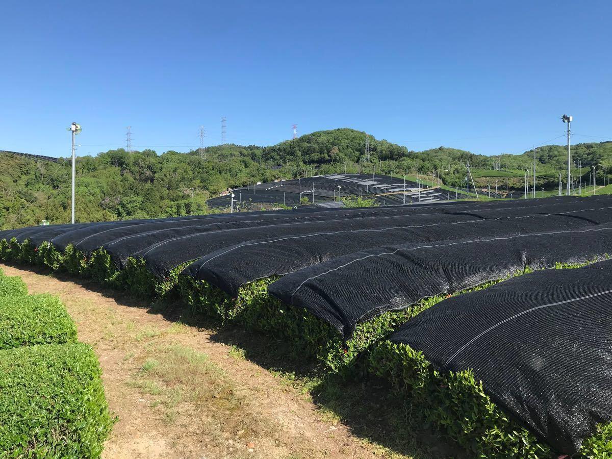 宇治茶100% 焙煎ほうじ茶100g×2 無農薬化学肥料不使用 2020年産