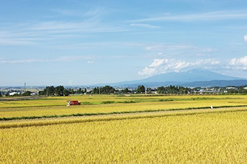 5kg 【精米】 山形県産 白米 つや姫 5kg. 令和2年産_画像8