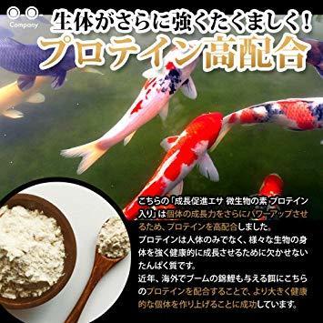 OーOー(オーオー)成長促進系エサ 微生物の素 プロテイン入り メダカ 稚魚(針子) 熱帯魚の餌_画像5