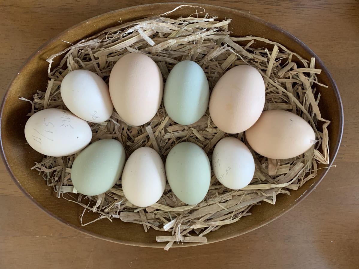 有精卵 10個 大軍鶏 セブライト 大冠桂チャボ 等いろいろ_画像3